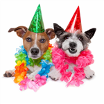 birthday_dog_party2